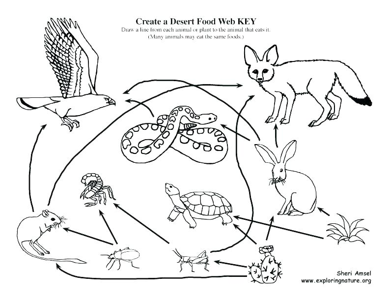 792x612 Food Chain Coloring Pages Food Chain Coloring Page Food Of Desert