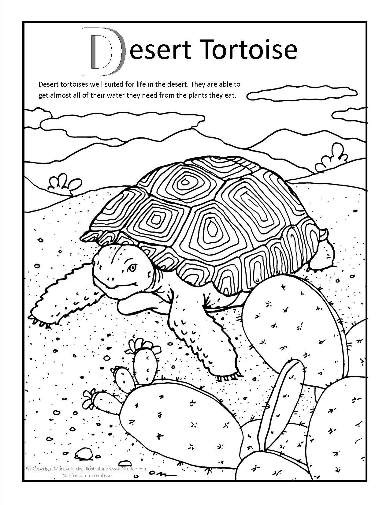 1275x1650 Fresh Desert Tortoise Coloring Page