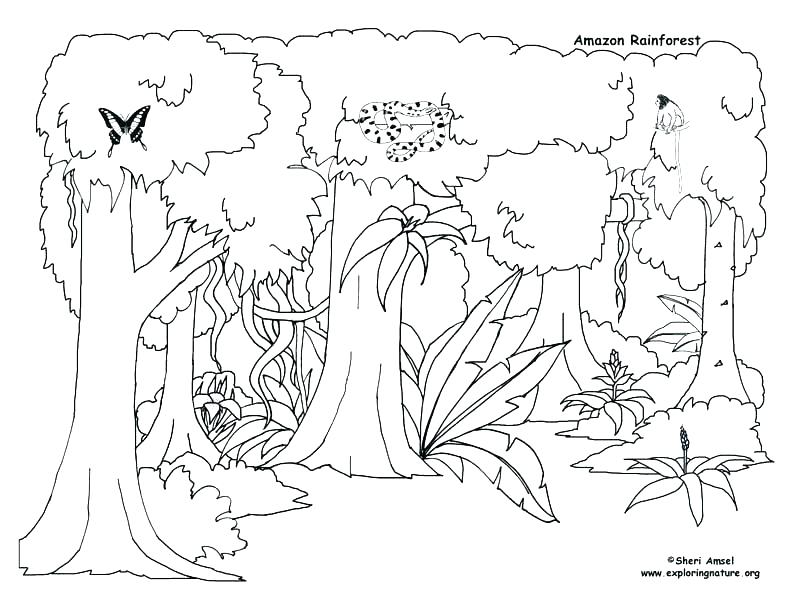 793x612 Desert Animal Coloring Pages Desert Animals Coloring Pages