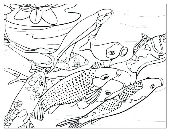 600x464 Animal Habitat Coloring Pages Desert Animals Page Forest Animal