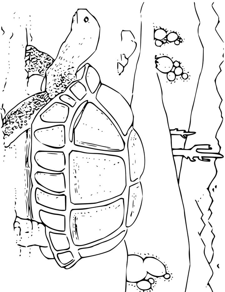 720x932 Tortoise Coloring Page For Kids