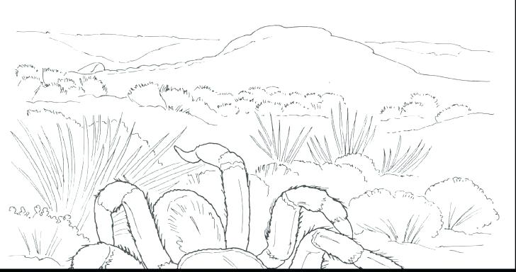 728x384 Animal Habitat Coloring Pages