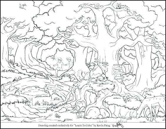 564x437 Animal Habitat Coloring Pages