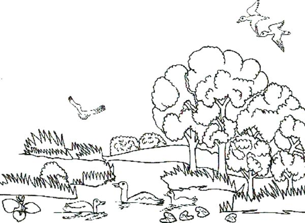 600x438 Animal Habitats Coloring Pages Desert Animals And Plants Coloring