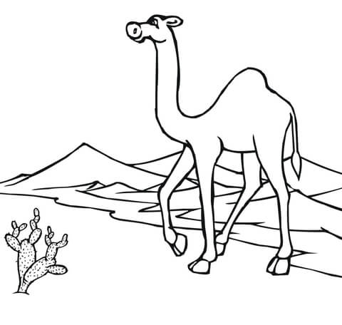 480x456 Camel On The Go Through Desert Coloring Page Free Printable Within