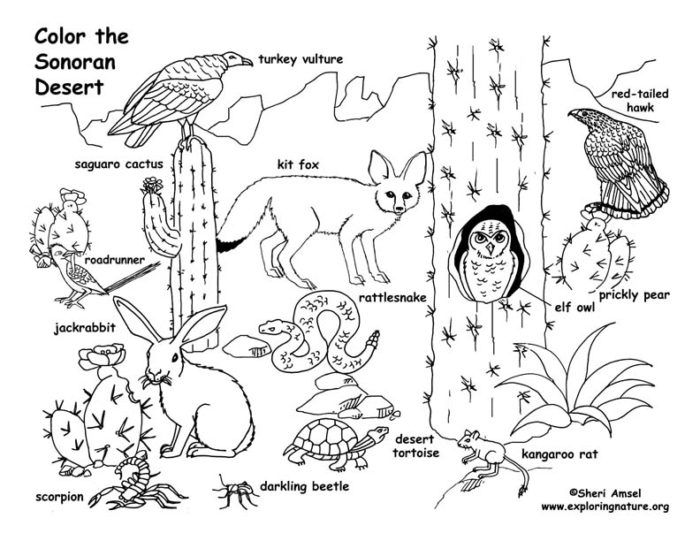 700x541 Desert Animal Coloring Pages Ccoloringsheets I'm A Teacher