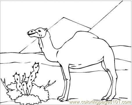 454x360 Desert Coloring Pages
