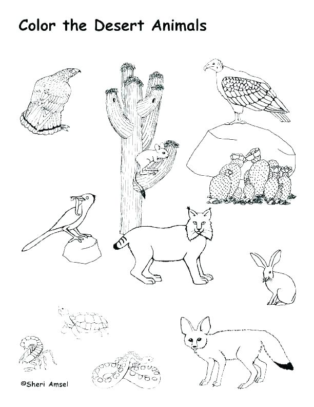 612x792 Desert Coloring Pages Animal Habitat Coloring Pages Desert