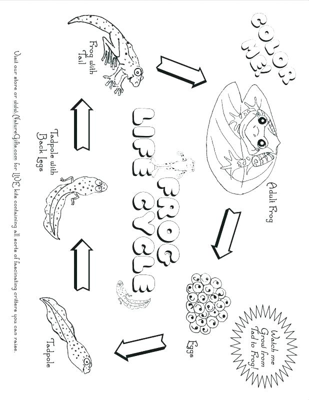 618x800 Desert Coloring Pages Desert Animals And Plants Coloring Pages
