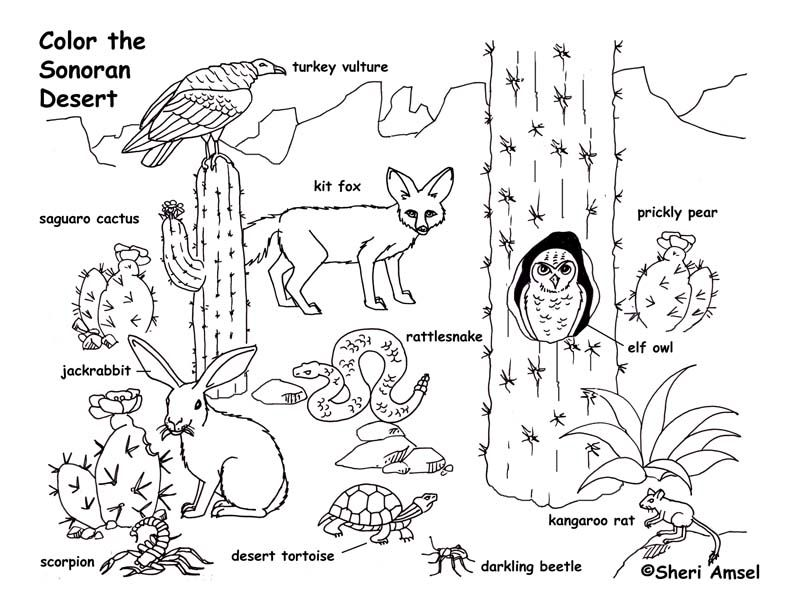 792x612 Desert Landscape Coloring Pages