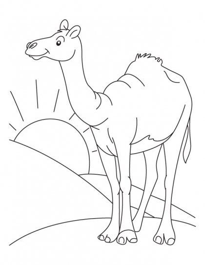 420x543 The Lone Arabian Camel Standing In The Sahara Desert Coloring Page