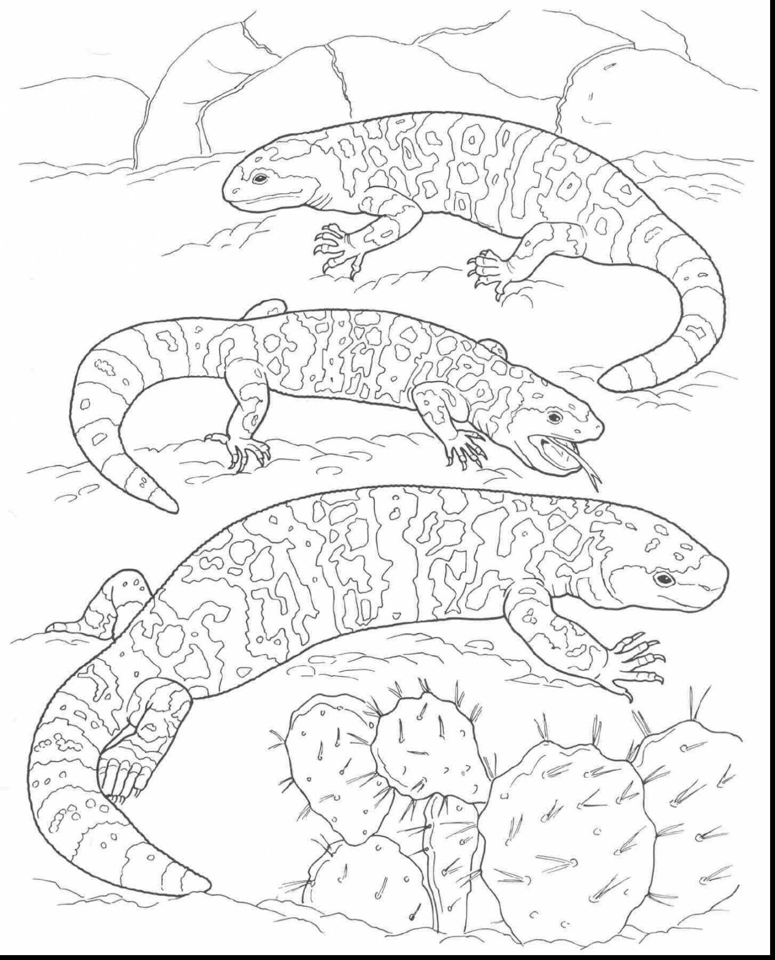 1588x1966 Desert Coloring Pages