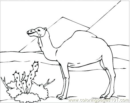 454x360 Desert Coloring Pages Desert Coloring Pages Camel In Desert
