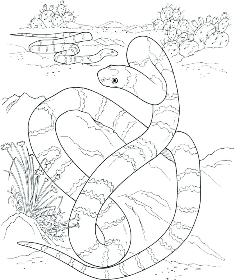805x963 Desert Coloring Pages Is Tempted In The Landscape Color Murs