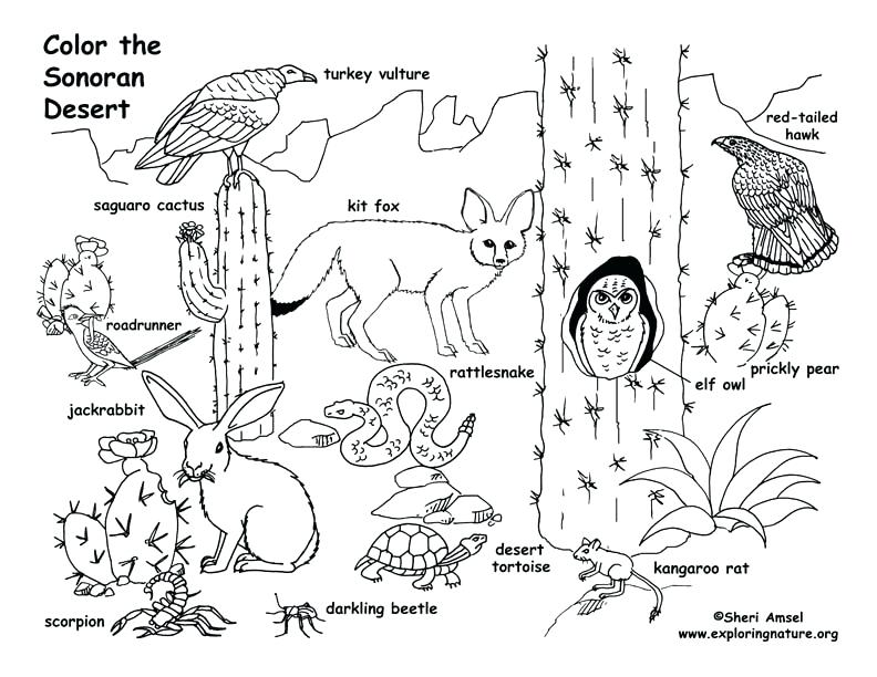 792x612 Desert Maze Coloring Page Coloring Pictures Desert Animals