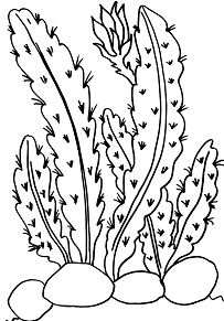 203x291 Deserts Coloring Pages