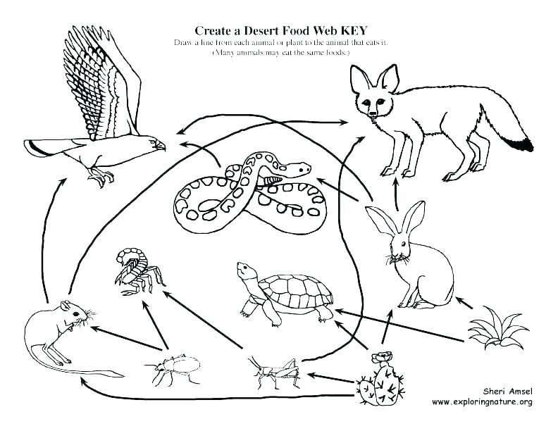 792x612 Desert Animals Coloring Pages Coloring Pages Printable Animals