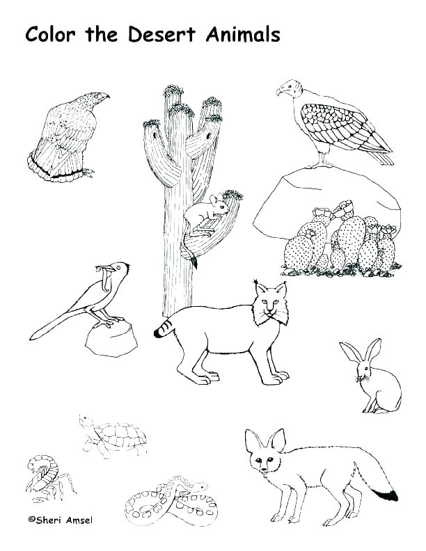 612x792 Animal Habitat Coloring Pages Desert Scene Coloring Pages