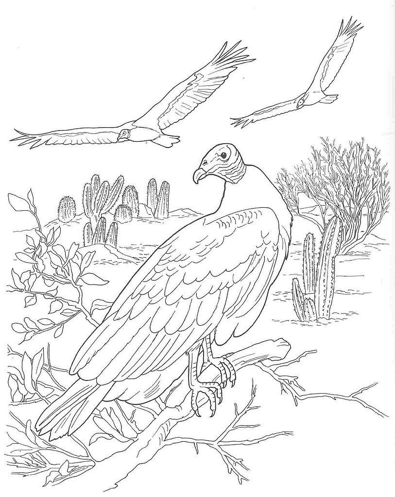 813x1024 Desert Scene Coloring Pages Name Desert Animals Coloring