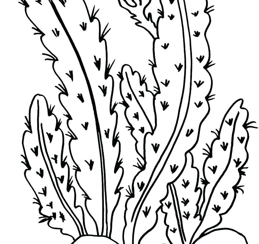 850x800 Desert Scene Coloring Pages Printable Desert Coloring Pages