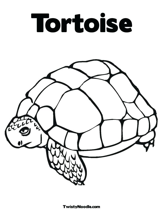 685x886 Tortoise Coloring Page Desert Coloring Pictures Desert Coloring