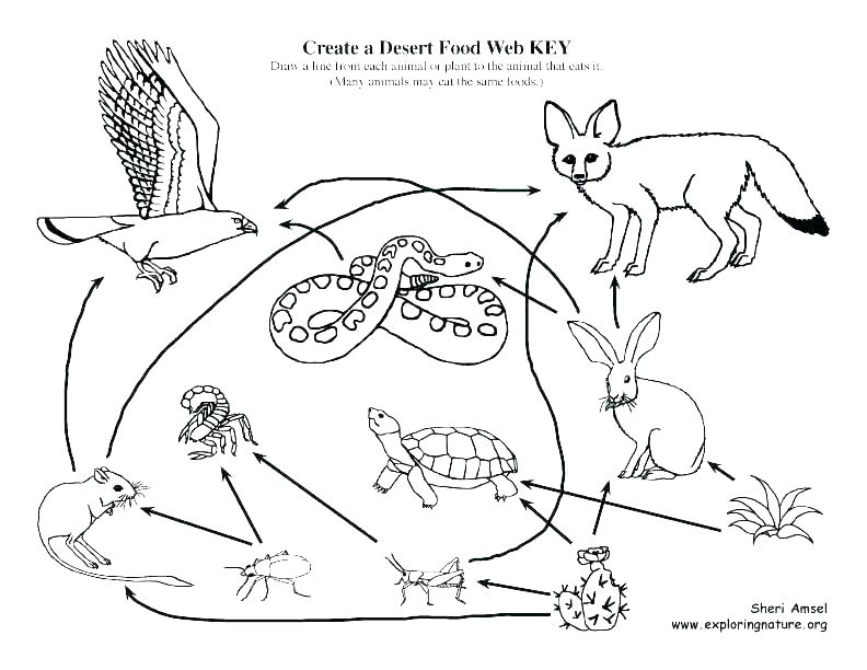 792x612 Tortoise Coloring Page Tortoise Coloring Page Tortoise Coloring