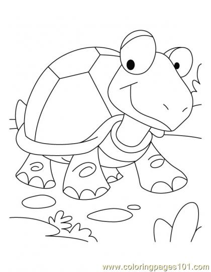 420x543 Tortoise Coloring Coloring Page