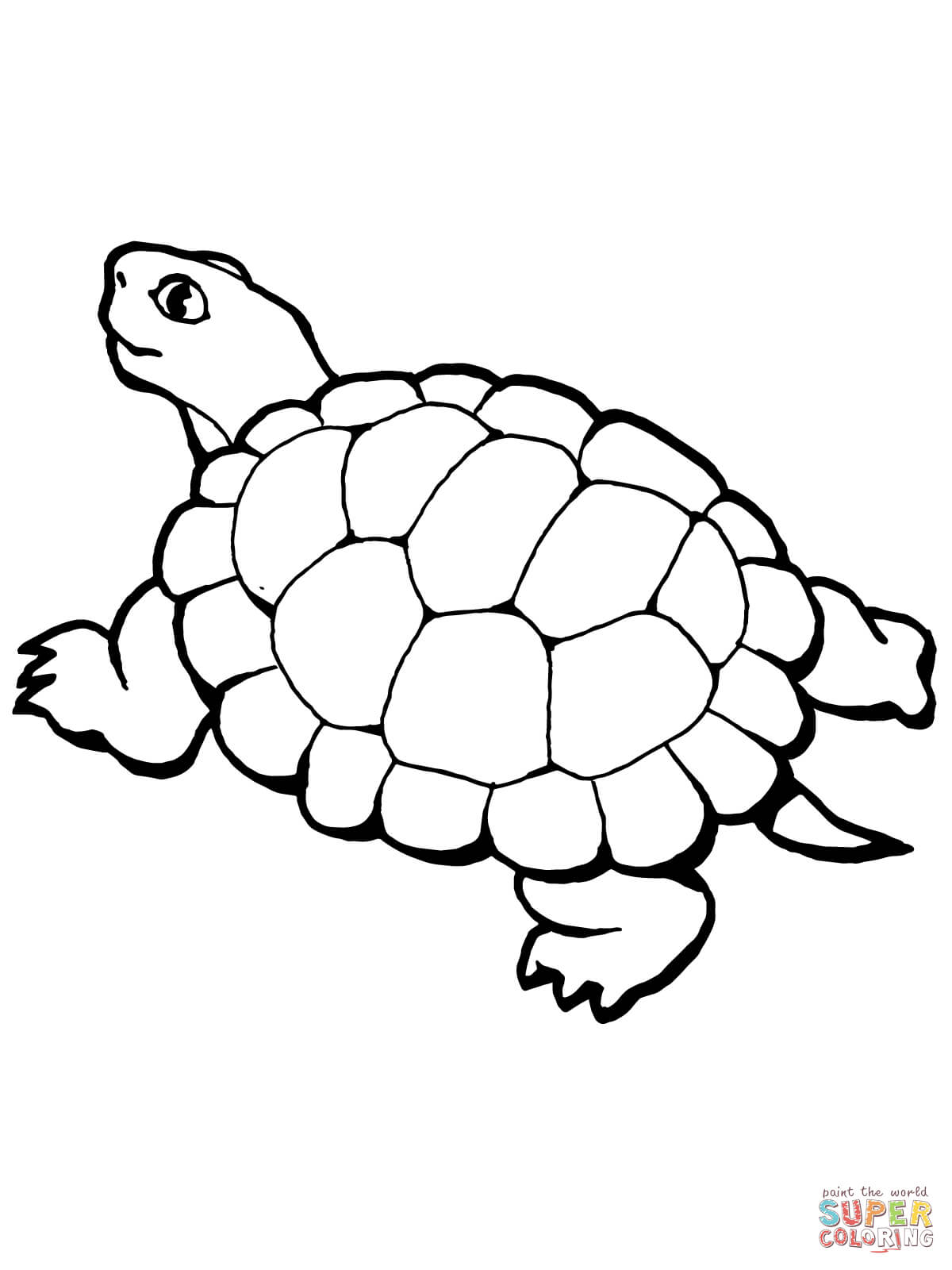 1200x1600 Valuable Tortoise Coloring Page Desert