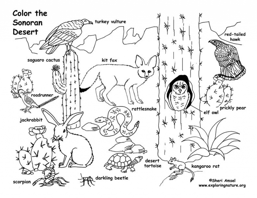 1024x791 Desert Coloring Pages