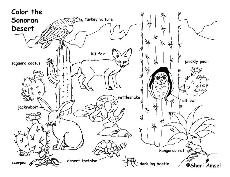792x612 Desert Coloring Pages Desert Animals Coloring Page Free Printable