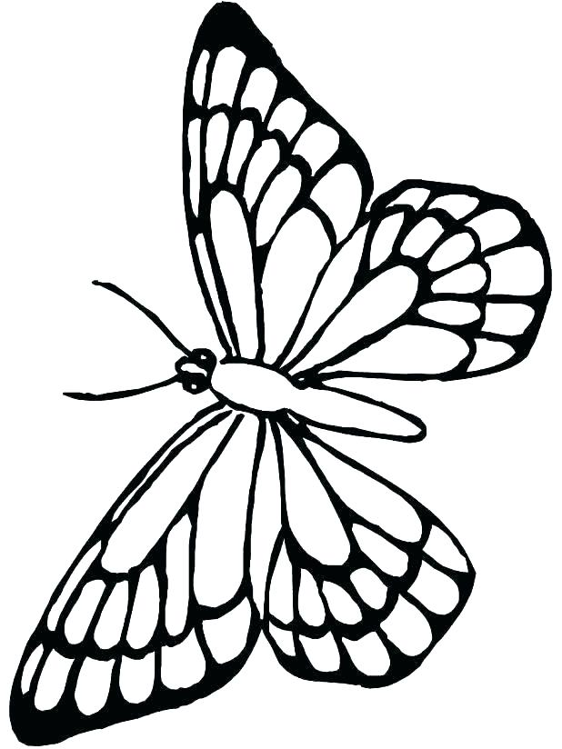 618x824 Butterfly For Coloring Butterfly Coloring Pages Free Plus