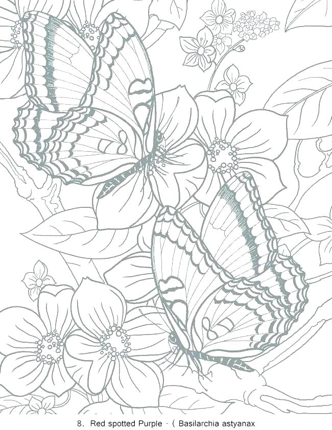 650x842 Butterfly Coloring Page Coloring Page Free Butterfly Coloring
