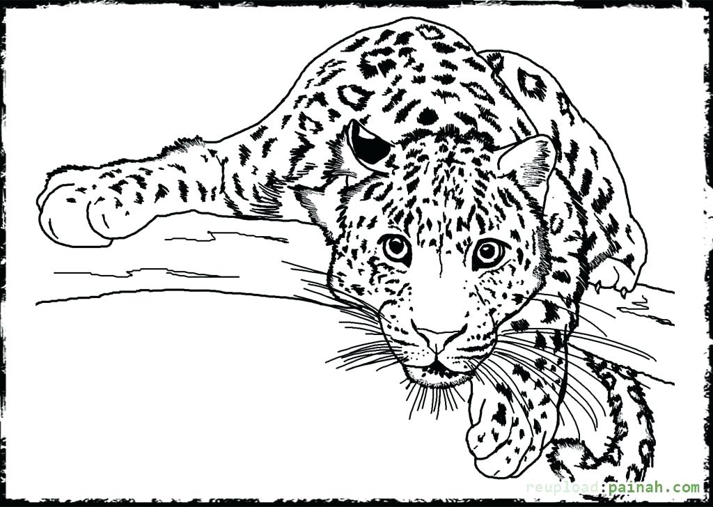 1024x728 Free Printable Detailed Coloring Pages