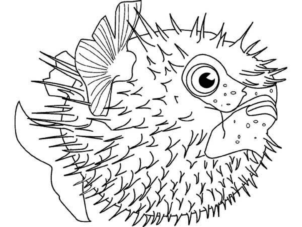 1024x768 Puffer Fish Coloring Page