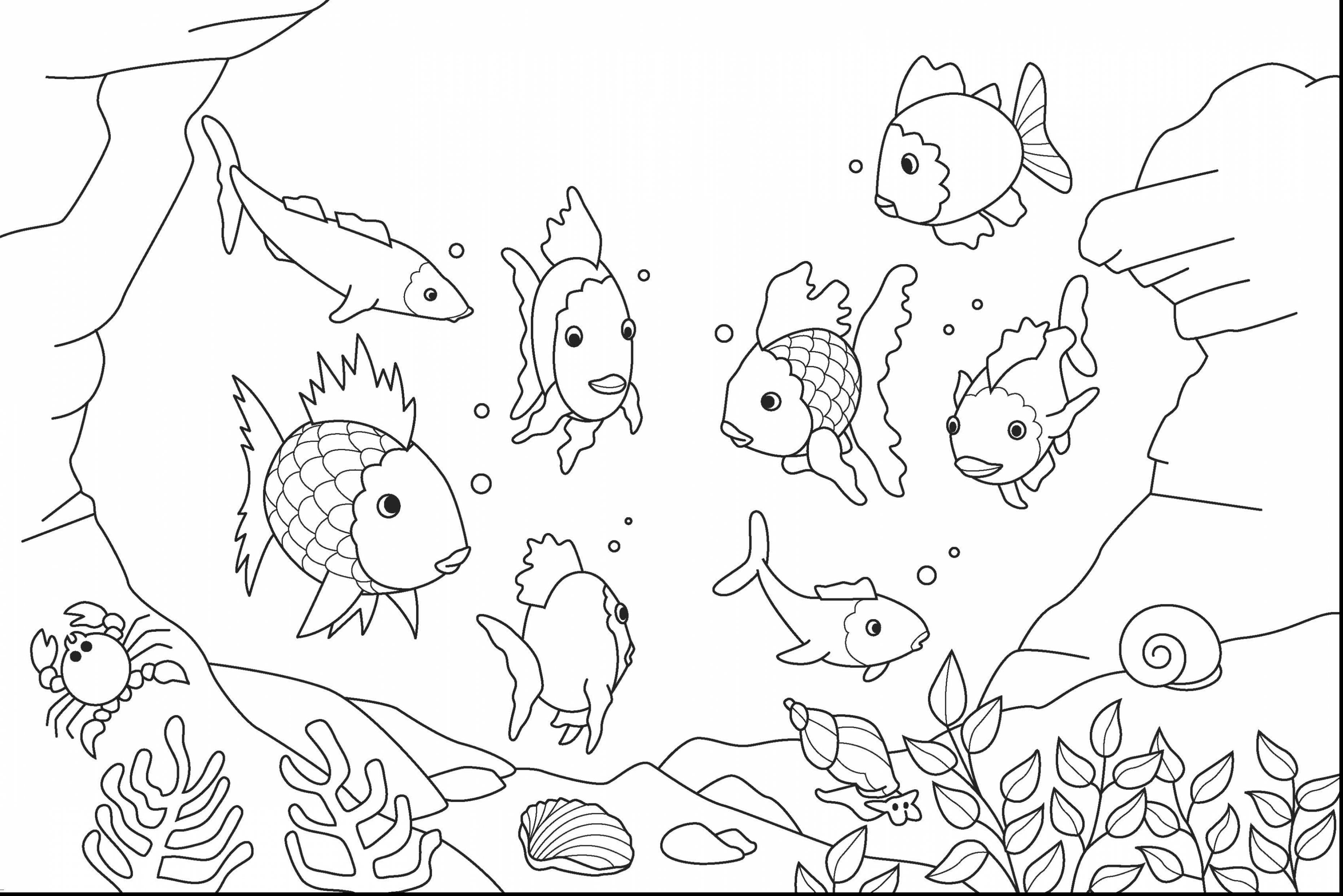 3724x2486 Realistic Fish Coloring Pages Free