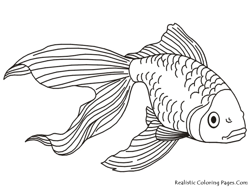 1024x768 Best Of Realistic Tropical Fish Coloring Pages Gallery Free