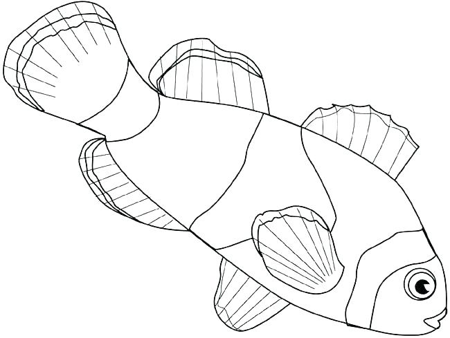 650x489 Clown Fish Coloring Page Fish Coloring Pages To Print Fish