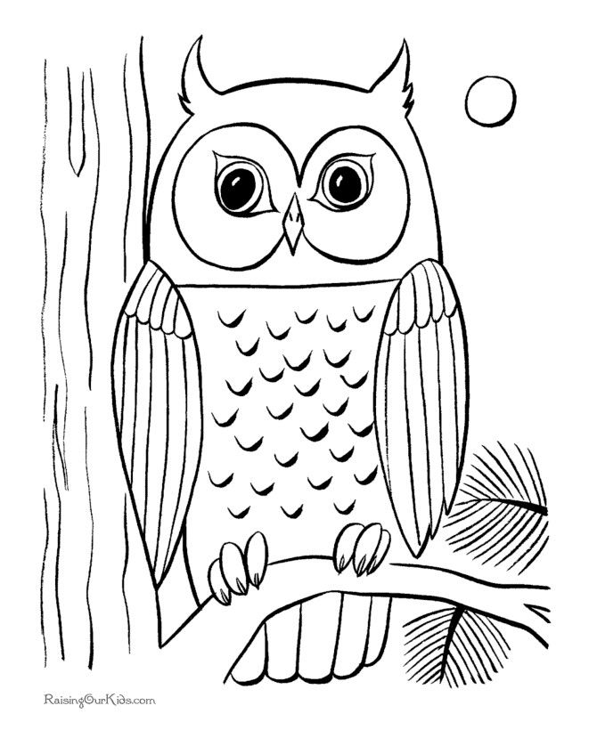 Detailed Owl Coloring Pages At GetDrawings Free Download