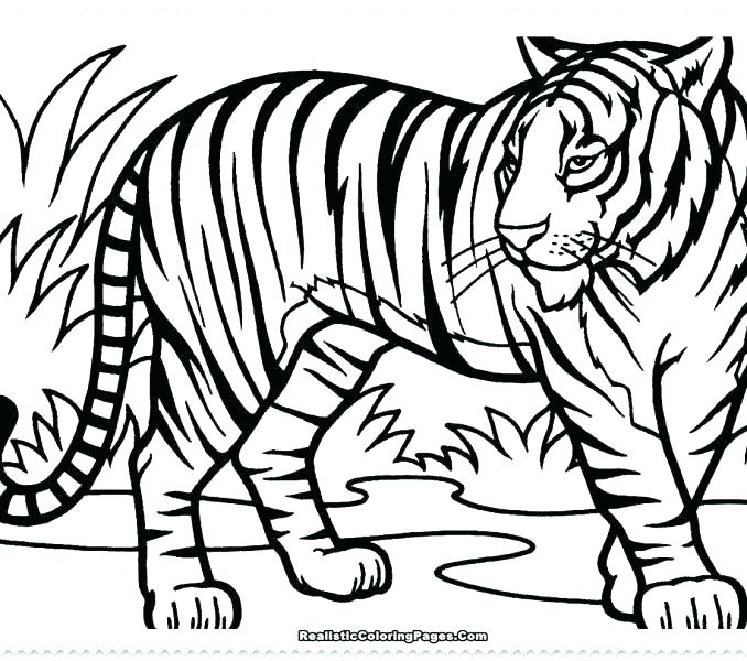 678x600 Coloring Pages Tiger Deepart