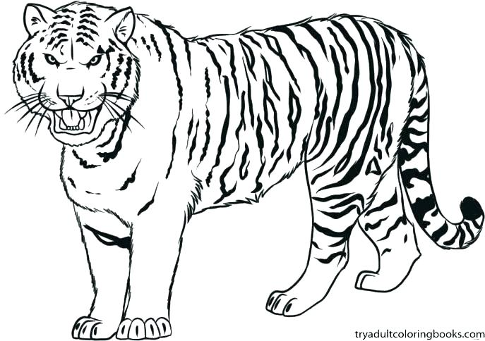 687x484 Detroit Tigers Coloring Pages Free Kids Coloring Coloring Pages