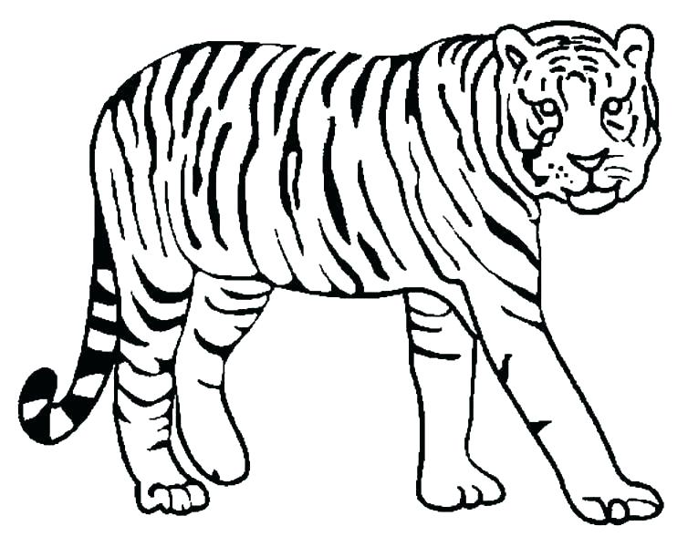 754x600 Detroit Tigers Coloring Pages Lion Coloring Page Detroit Tigers