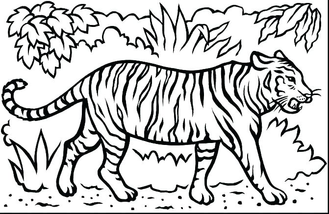 671x437 Coloring Pages Of Tigers Coloring Pages Coloring Pages Tiger