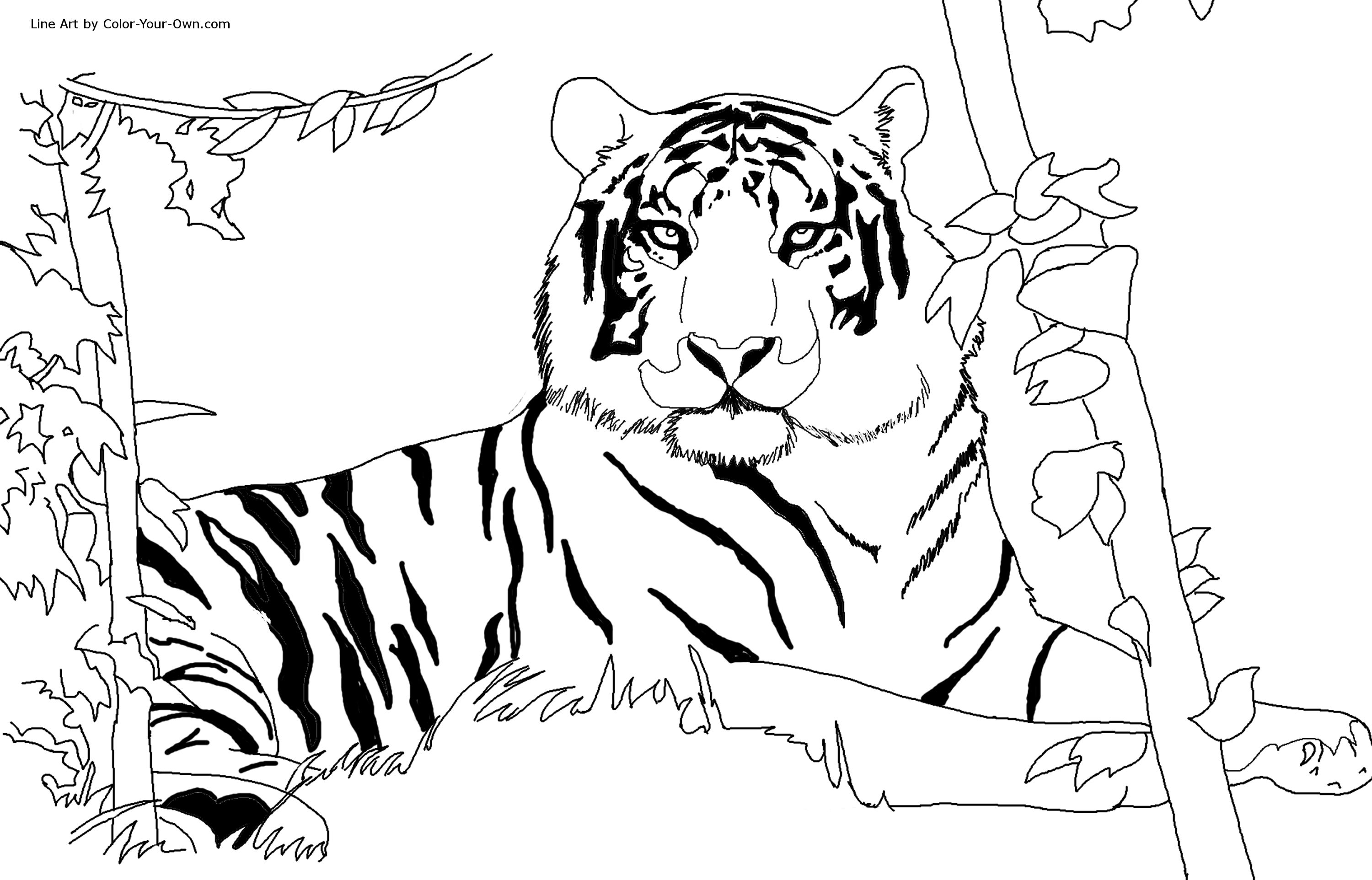 3000x1924 Lovely Ideas Coloring Page Tiger Free Printable Tig On Coloring