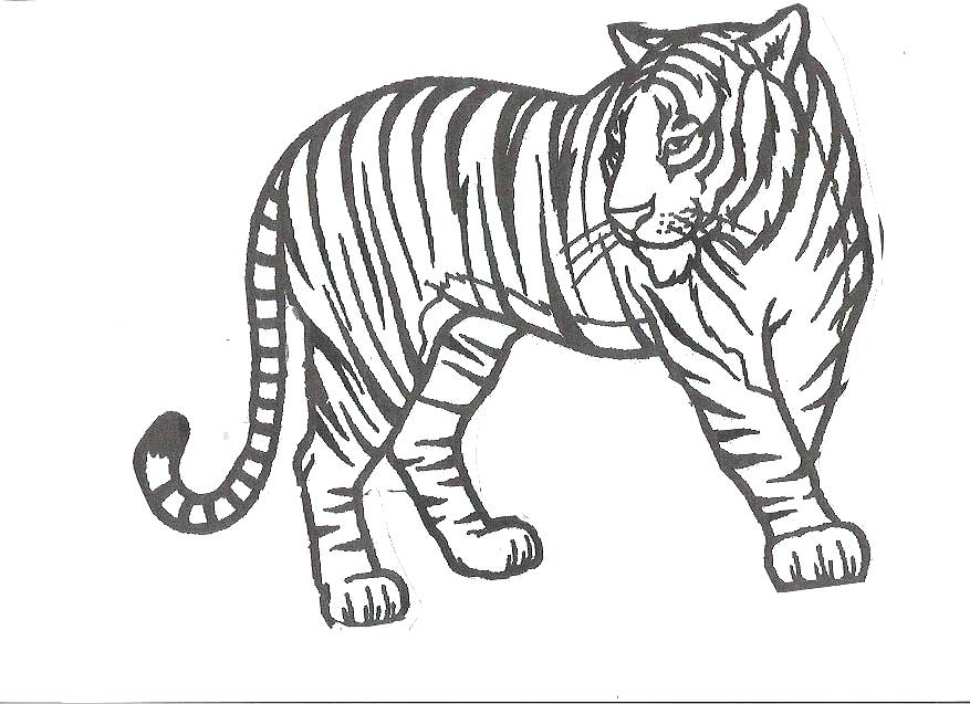 877x637 Tiger Color Pages Lofty Tiger Coloring Pages For Kids Detroit
