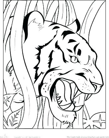 347x440 Tiger Color Pages Tigers Coloring Pages Coloring Kids Coloring