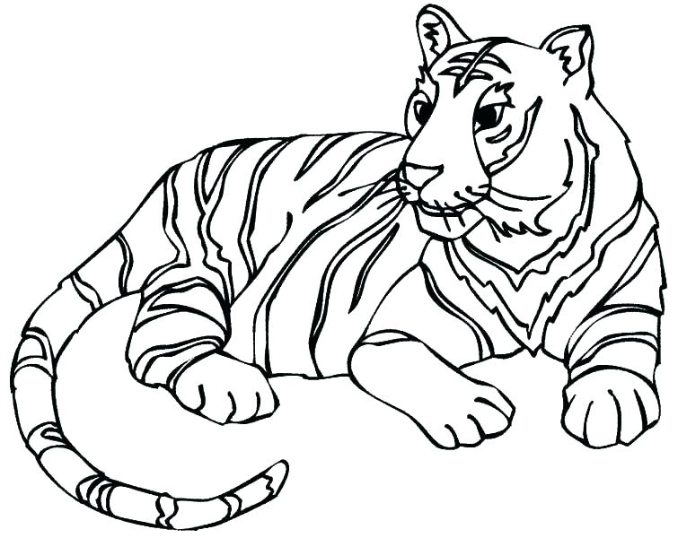 755x600 Coloring Pages Of Tigers
