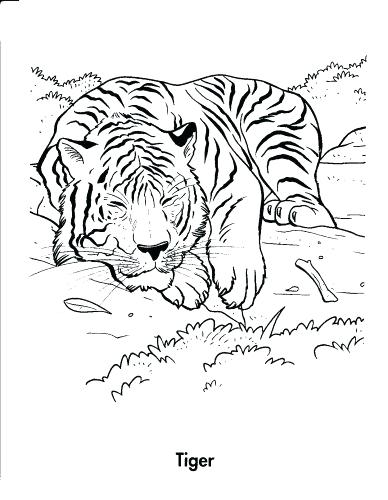 388x500 Coloring Pages Tigers Medium Size Tiger Coloring Pages