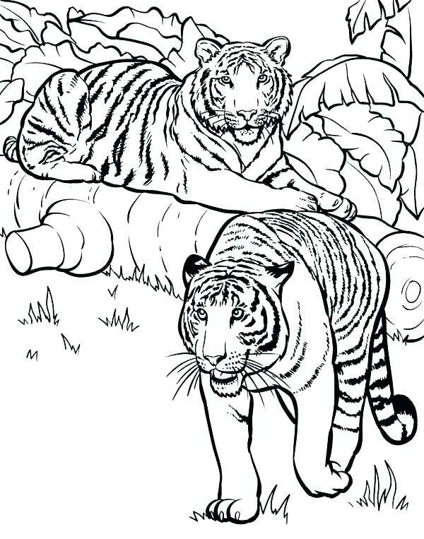 600x763 Detroit Tigers Coloring Pages Coloring Pages Of Tigers Free Tiger