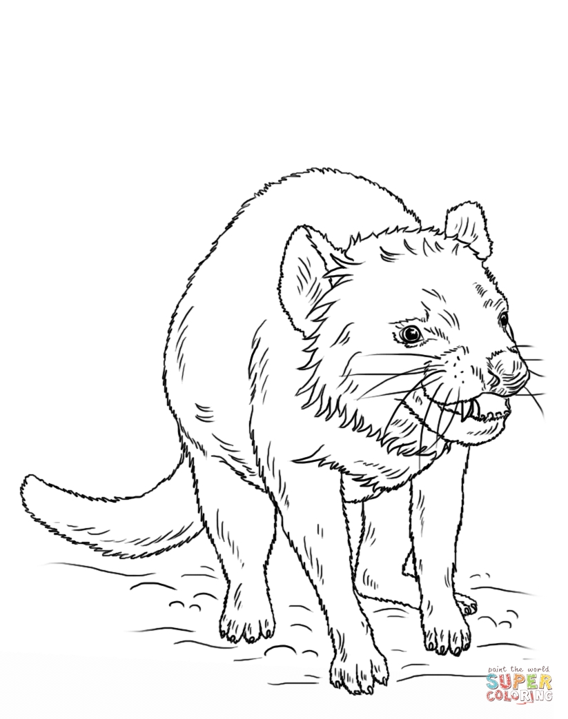823x1043 Tasmanian Devil Coloring Pages Printable Coloring For Kids