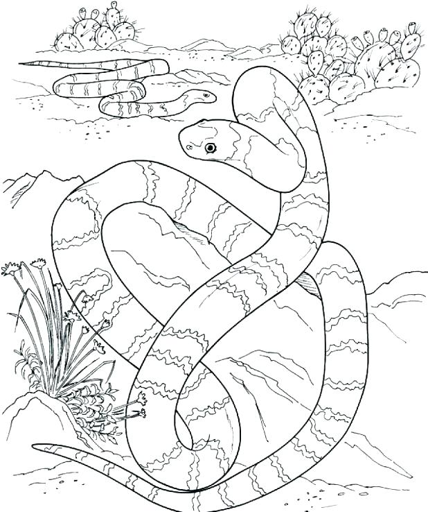618x738 Rattlesnake Coloring Pages Coloring Pages Snake Rattlesnake
